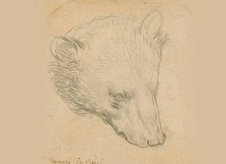 rysunek szkic Leonardo da Vinci